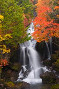 竜頭の滝の紅葉の写真素材 [FYI03256135]
