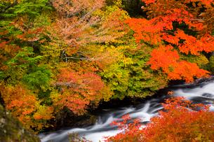 竜頭の滝の紅葉の写真素材 [FYI03256184]