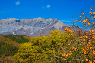 大山と実る柿の写真素材 [FYI03256189]