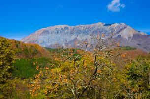大山と実る柿の写真素材 [FYI03256215]