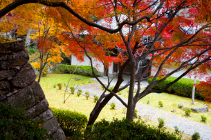 紅葉の西教寺の写真素材 [FYI03256224]