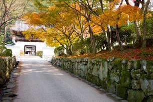 興聖寺参道琴坂の紅葉の写真素材 [FYI03256314]