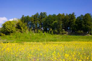 菜の花咲く小原の里と大伴夫人の円墳の写真素材 [FYI03256392]