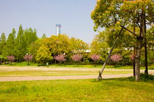 八重桜の咲く南港公園とWTCビルの写真素材 [FYI03256401]