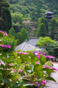 大瀧山西法院の紫陽花と三重塔の写真素材 [FYI03256473]