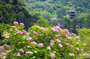 大瀧山西法院の紫陽花と三重塔の写真素材 [FYI03256477]