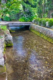 紫陽花が咲く醒ヶ井宿の地蔵川の写真素材 [FYI03256480]