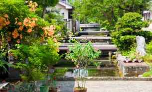 ノウゼンカズラ咲く醒ヶ井宿の地蔵川の写真素材 [FYI03256481]