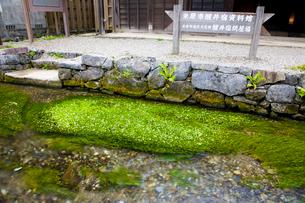 梅花藻の揺れる醒ヶ井宿の地蔵川の写真素材 [FYI03256489]