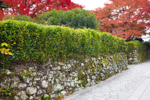 穴太衆積み石垣の残る門前町と紅葉の写真素材 [FYI03256571]