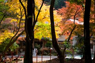 日吉大社境内の紅葉の写真素材 [FYI03256576]