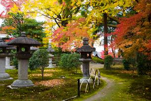 慈眼堂庭園の紅葉の写真素材 [FYI03256582]