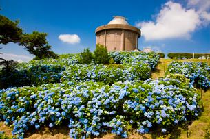猪名川天文台を彩る紫陽花の写真素材 [FYI03256708]