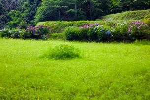 紫陽花咲く葛城古道の神話の里高天原の写真素材 [FYI03256735]