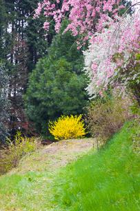 天野の里の春の写真素材 [FYI03256811]
