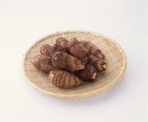 里芋(土垂種)の写真素材 [FYI03257242]