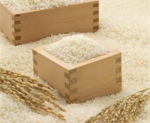 こしひかりの白米と稲穂と桝の写真素材 [FYI03257368]