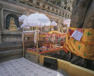マハーボーディ寺院(菩提寺) インドの写真素材 [FYI03258554]