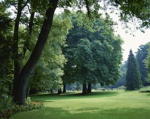 リュクサンブール庭園 6月  パリ フランスの写真素材 [FYI03260627]