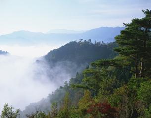 雲海と紅葉 国見ヶ丘より望むの写真素材 [FYI03260814]