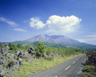 桜島溶岩道路の写真素材 [FYI03261044]