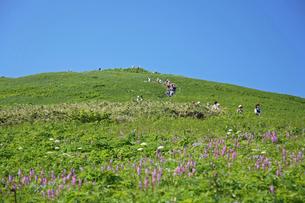 花咲く桃岩登山コースの写真素材 [FYI03261217]
