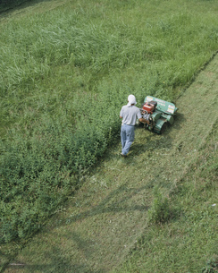 庭草刈りの写真素材 [FYI03261265]