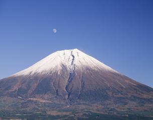 月と新雪の富士 田貫湖の写真素材 [FYI03263319]