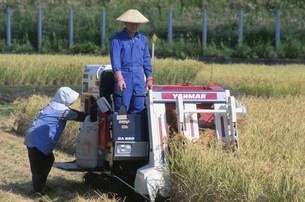 米の稲刈りの写真素材 [FYI03264231]