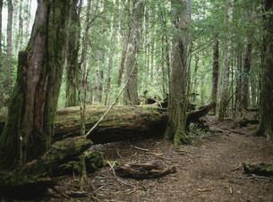 森の倒木 バリローチェ近郊の写真素材 [FYI03265576]
