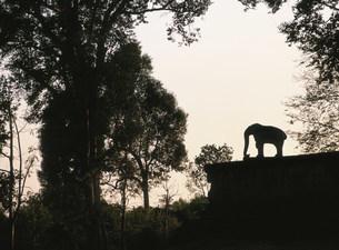 東メボン アンコール遺跡の写真素材 [FYI03265715]