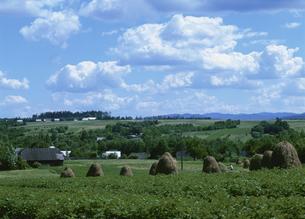 農耕地 グラ・フモール近郊 ルーマニアの写真素材 [FYI03266988]