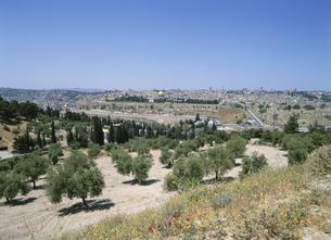 オリーブ畑と市街 エルサレム  イスラエルの写真素材 [FYI03267099]