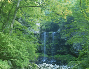 夫婦滝 長良川源流の写真素材 [FYI03267881]