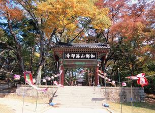 海印寺山門の紅葉の写真素材 [FYI03267884]