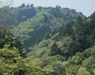 高尾山の写真素材 [FYI03267938]