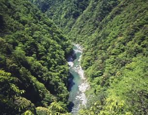 新緑の祖谷渓の写真素材 [FYI03268179]
