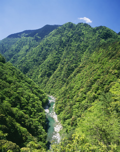 新緑の祖谷渓の写真素材 [FYI03268185]