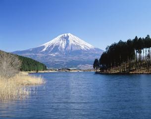 田貫湖より望む富士山の写真素材 [FYI03268634]