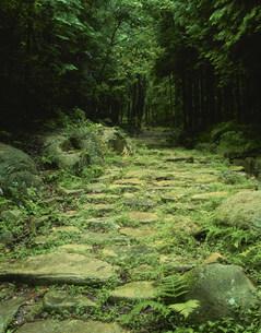 旧中山道の写真素材 [FYI03268711]