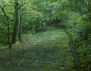 旧中山道十曲峠の石畳の写真素材 [FYI03268713]