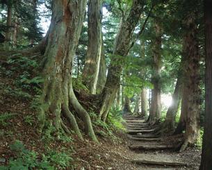 旧中山道の並木道 奈良井の写真素材 [FYI03268722]