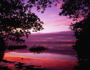 琵琶湖 唐崎の朝の写真素材 [FYI03268812]