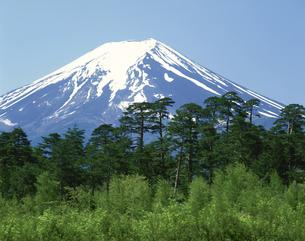 新緑の富士山   山梨県の写真素材 [FYI03268932]