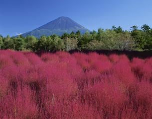 ほうき草の秋と富士山 足和田村の写真素材 [FYI03268979]
