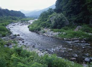 夏の白石川の写真素材 [FYI03269024]