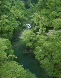 新緑の付知川の写真素材 [FYI03269308]