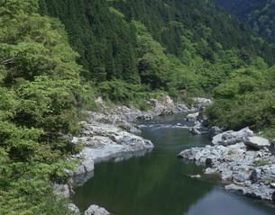 新緑の飛騨川の写真素材 [FYI03269309]