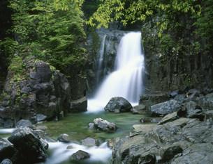 不動渓谷の仙樽の滝の写真素材 [FYI03269310]