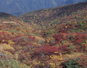 紅葉 栗駒山の写真素材 [FYI03269320]